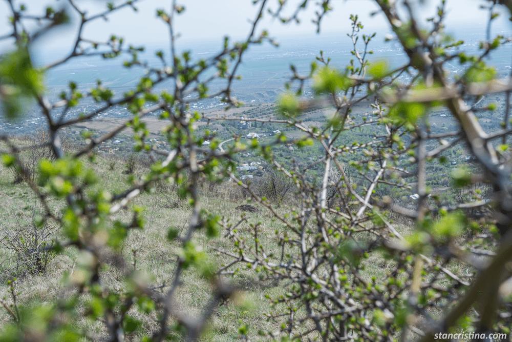 orasul-printre-copaci