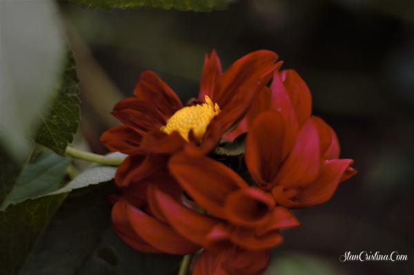 florile din gradina ce ma fac sa ma simt bine