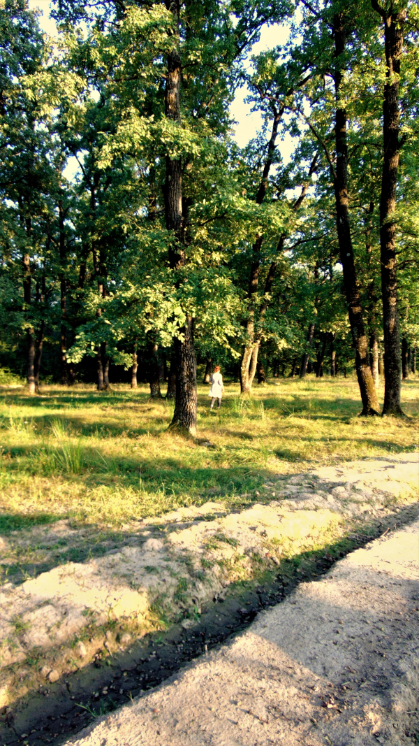 pădure cheală